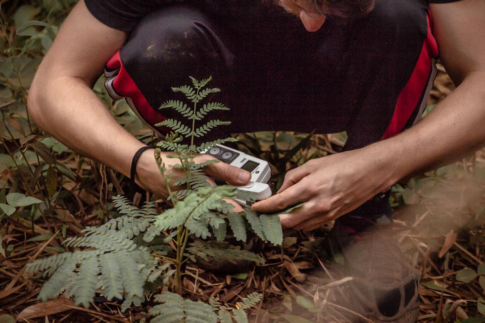 Pesquisador da UFJF testa espécie em área atingida por rejeito de barragem da Samarco: trabalho para recompor vegetação (Foto: Divulgação?UFJF)