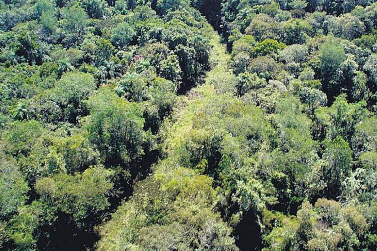 A Estrada do Colono, dentro do Parque Nacional do Iguaçu e fechada desde 2001: proposta de reabertura também reabre polêmica entre ambientalistas e moradores e empresários da região (Foto: ICMBio)