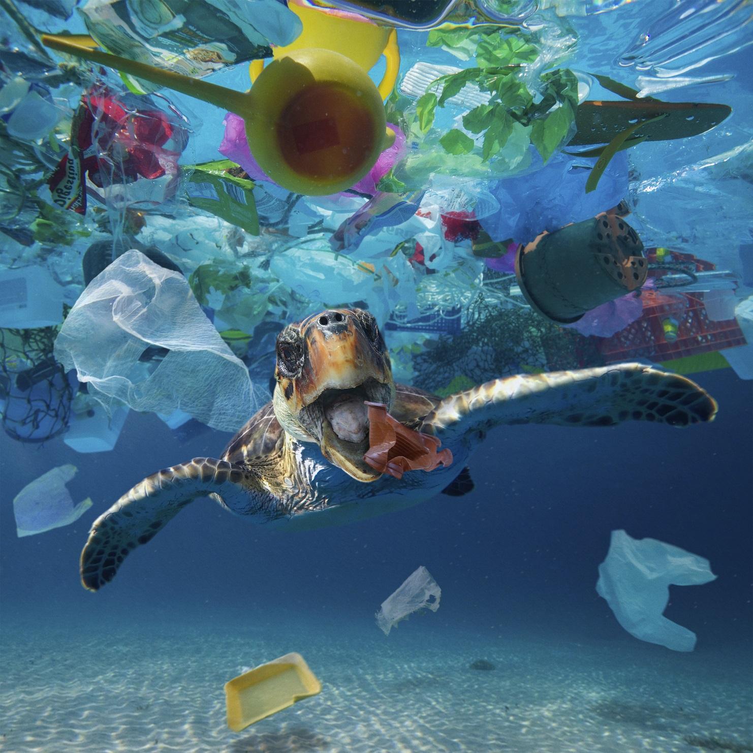 Estudos calculam em 2,5 milhões de dólares o prejuízo anual causado pelas 8 milhões de toneladas de plástico despejadas nos oceanos por ano. Foto Paulo Oliveira/Biosphoto