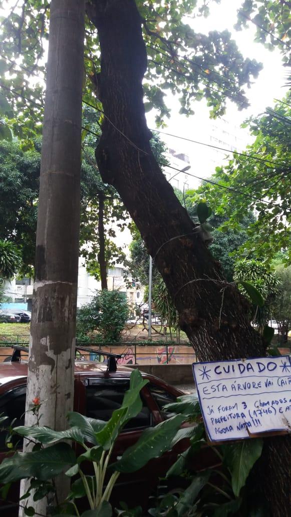 poda de árvores no Rio