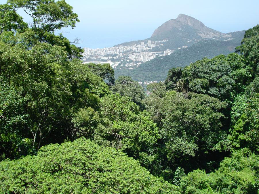 O Parque Nacional da Tijuca abriga maior floresta urbana do mundo, que fica na cidade onde o prefeito ignora o Dia Mundial do Meio Ambiente (Foto: ICMBio)
