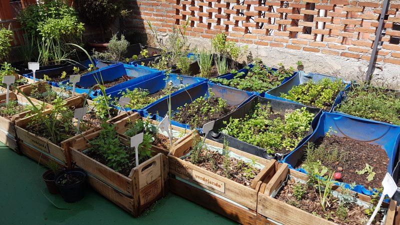 Horta na laje em Paraisópolis: plantações ajudam até a diminuir temperatura nas casas (Foto: Florência Costa)