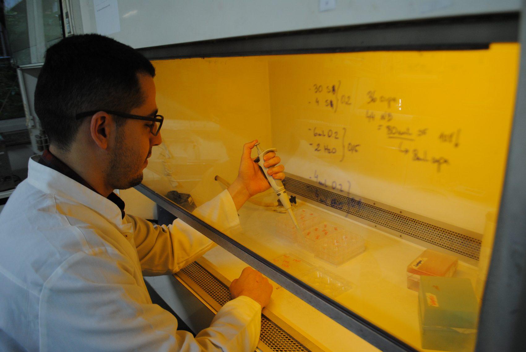 O pesquisador Fabiano Brito no Laboratório de Ecotoxicologia e Mutagênese Ambiental: extrato de fruto da erva-mate mata caramujo que ataca arroz (Foto: Cibele Carneiro)