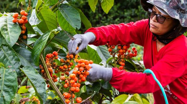 Rosiene trabalha há 15 anos com o cultivo do guaraná (Foto: Bruno Zanardo)