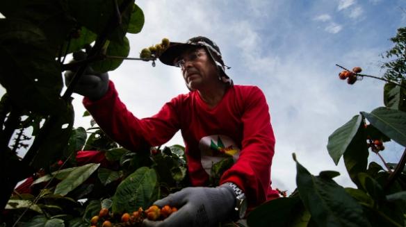 Antônio Carlos, de 48 anos, herdou do pai a paixão pelo guaraná (Foto: Bruno Zanardo)