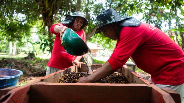 Em uma das etapas do processo de produção, frutos são lavados (Foto: Bruno Zanardo)