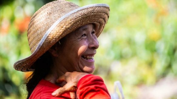 'Dá vontade de passar o dia inteiro, ainda mais quando tem muito, né?', compartilha Dona Maria em meio aos pés de guaraná (Foto: Bruno Zanardo)