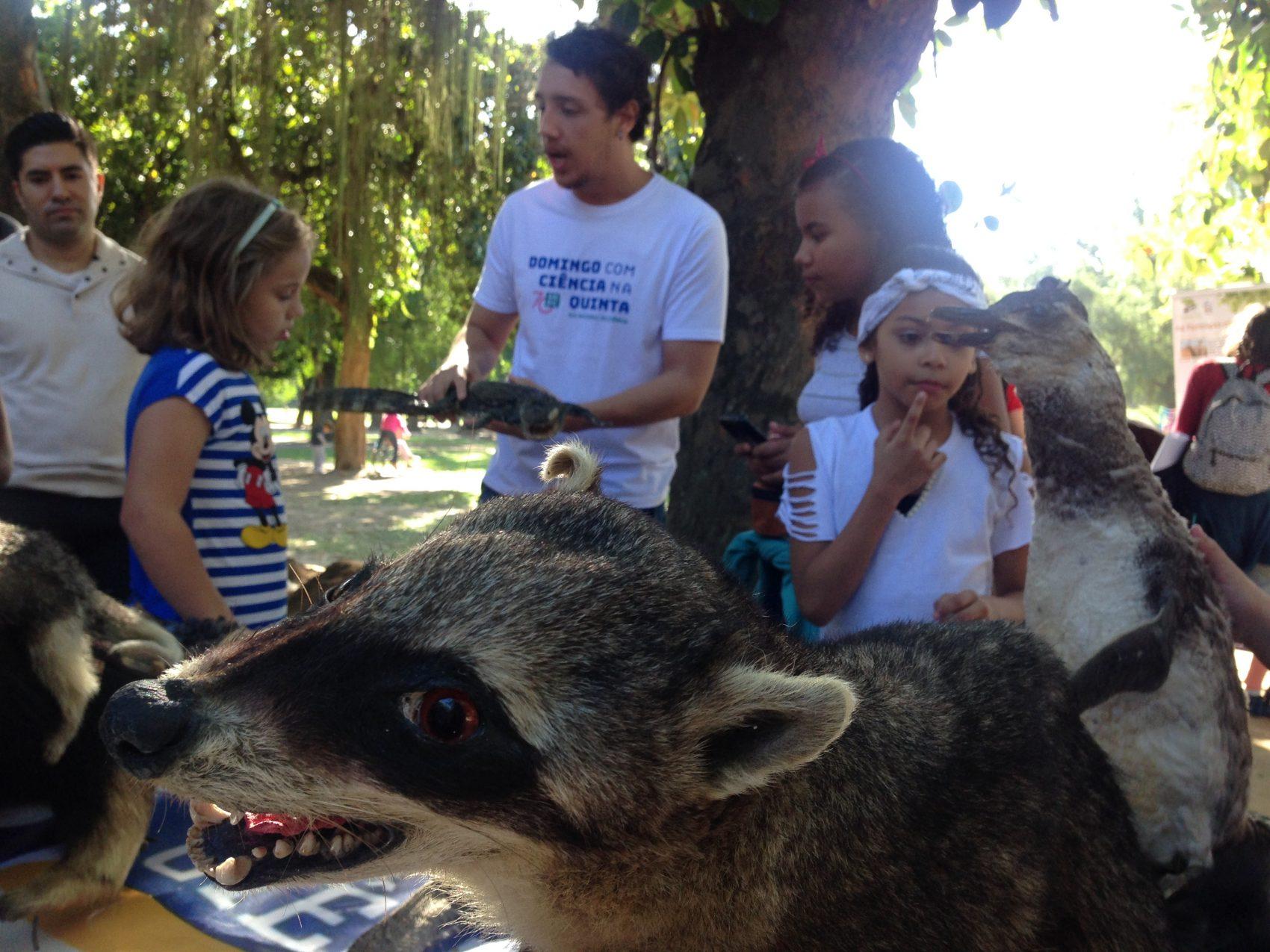 Professor do Núcleo de Estudos e Pesquisas em Animais Selvagens da UENF mostra trabalho da universidade a crianças: divulgação científica na Quinta da Boa Vista (Foto: Barbara Lopes)