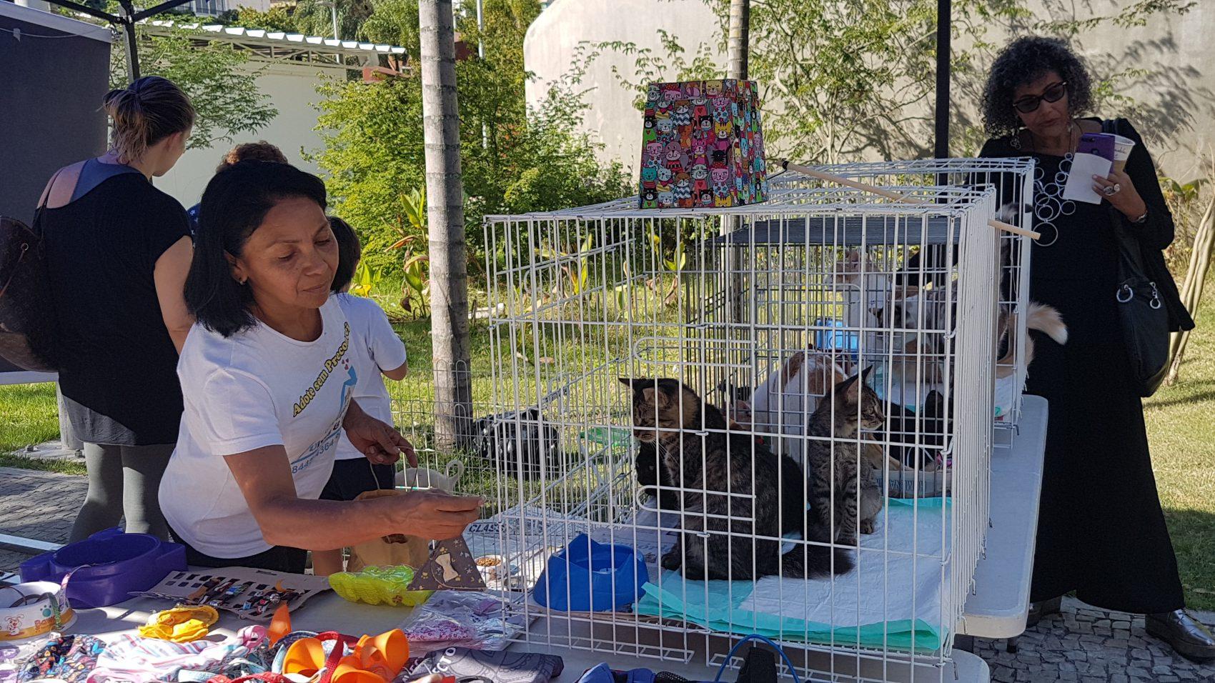 Projeto Uivos e miados na Praça Antero de Quintal: adoçao de gatos e cães nas largas calçadas do Leblon (Foto: Oscar Valporto)