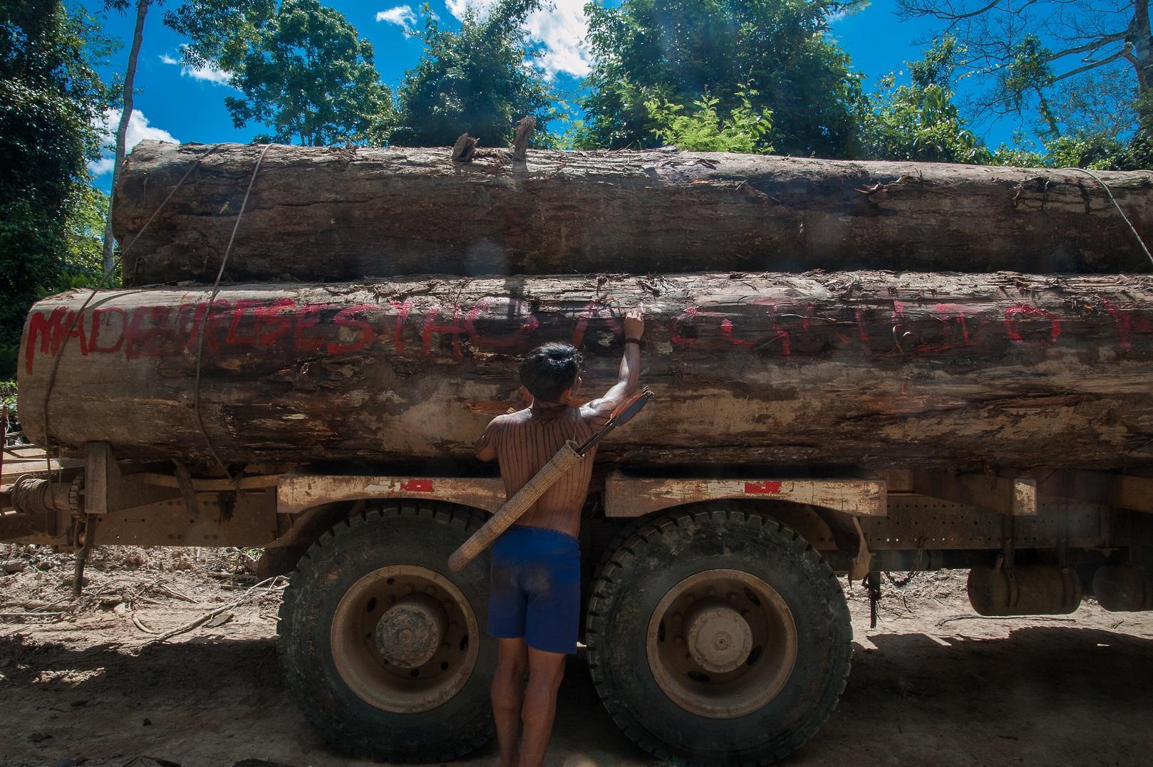 Durante dez dias, organizados em cinco grupos, os indígenas percorreram cerca de 100 km dentro da Terra Indígena Sawré-Muybu e encontraram dois grupos de madeireiros ilegais. Foto Anderson Barbosa