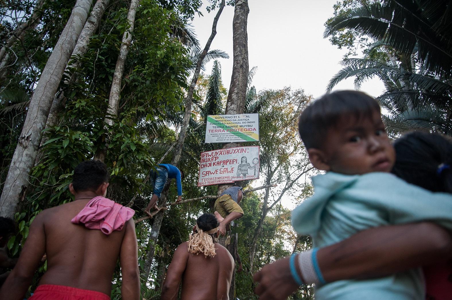 Indígenas colocam as placas indicativas de terras protegidas e demarcadas na região do rio Jamanxim, conhecido ponto de intensa atividade madeireira e garimpeira no estado do Pará.Foto Anderson Barbosa