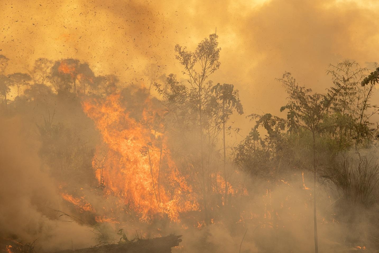 Os incêndios são, em sua maioria, criminosos e têm como objetivo preparar a área para a criação de gado. Foto Marcio Pimenta