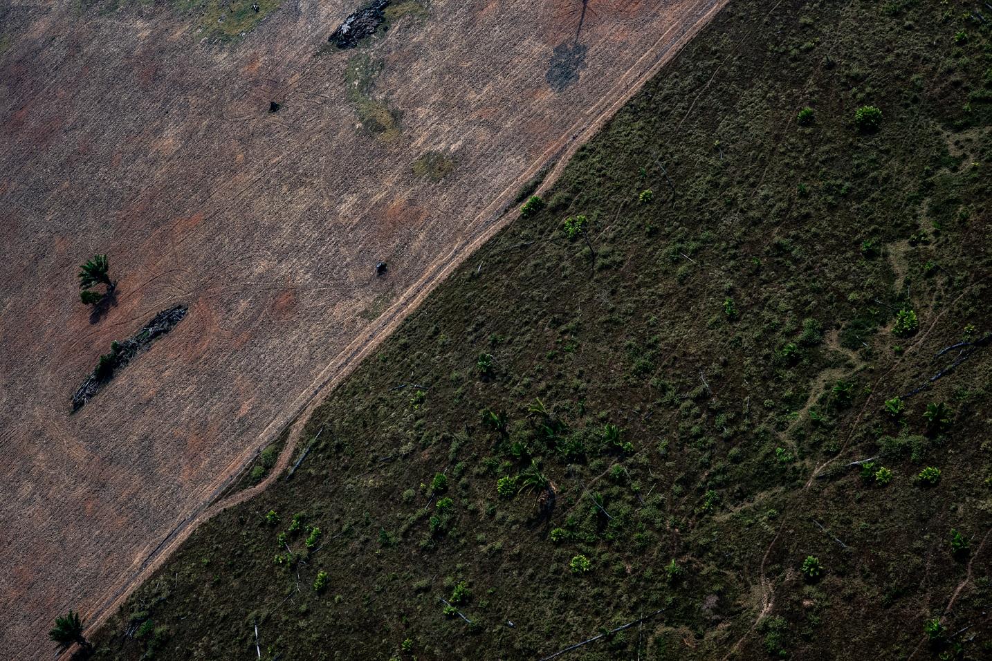 O contraste entre a vegetação natural e uma área com a intervenção das pegadas humanas. Foto Marcio Pimenta