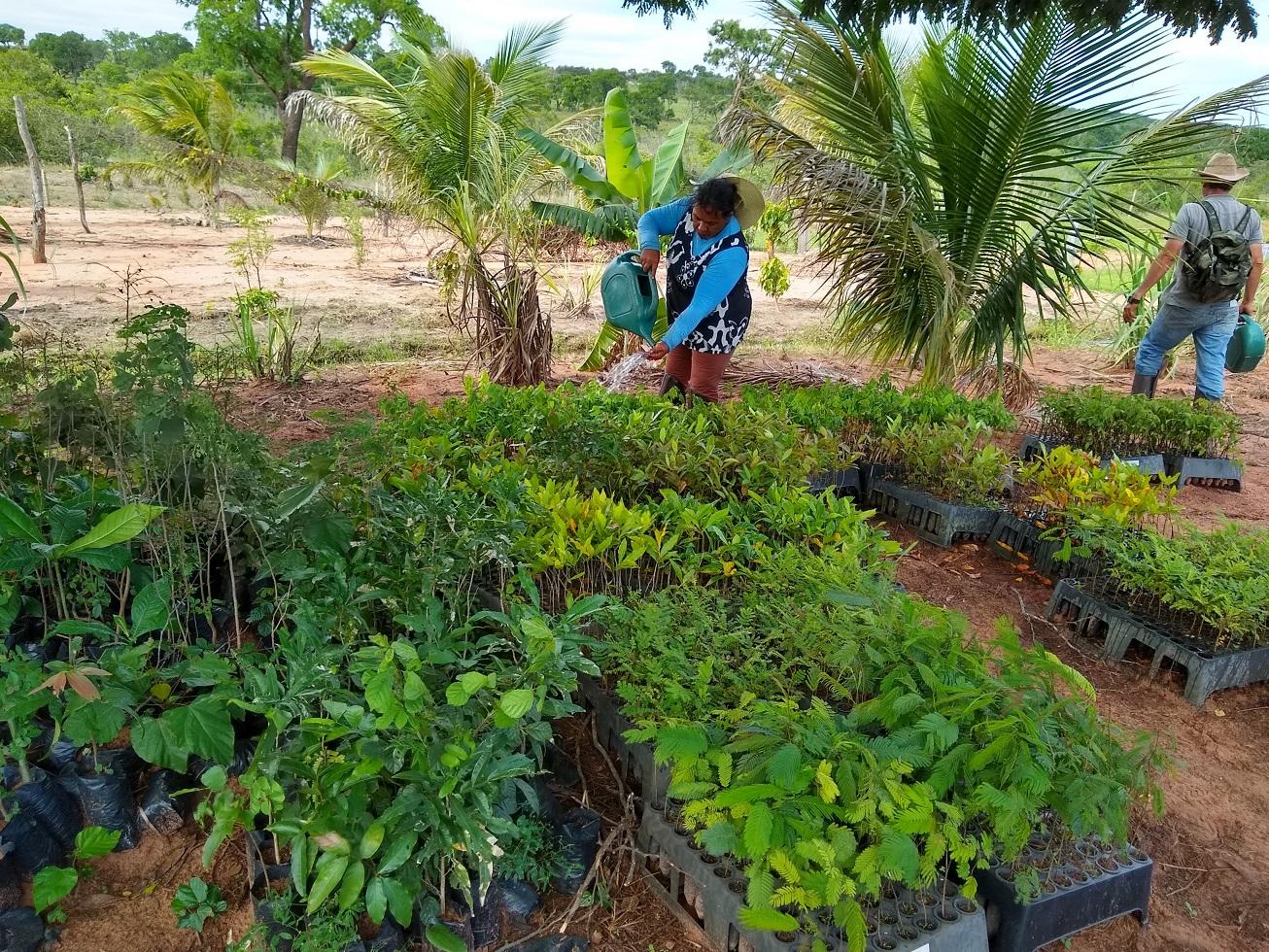 Canteiro de mudas para a recuperação de vegetação nativa em Guariroba, no Mato Grosso do Sul. Foto Maria Luciana Zequim