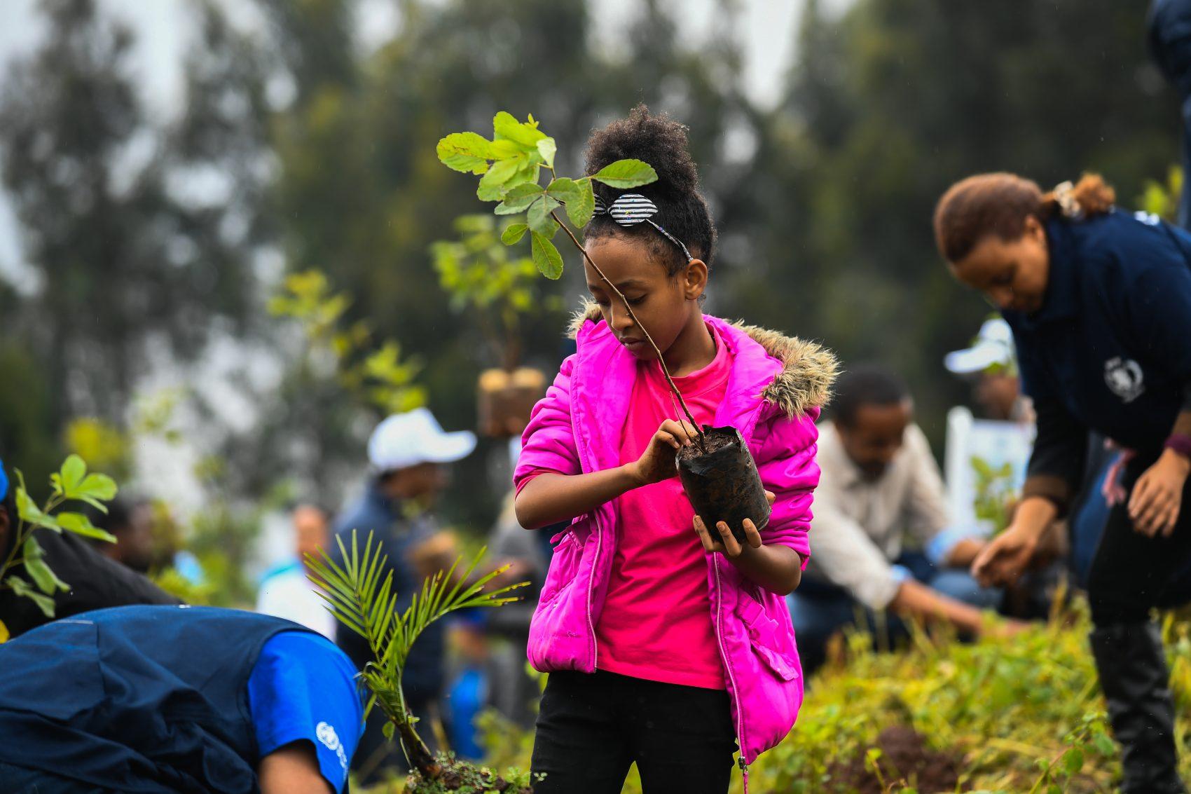 Jovem de Adis Abeba no mutirão que plantou 250 milhões em um dia na Etiópia: plantio de mais um trilhão de árvores no planeta poderiam compensar emissões de gás carbono (Foto: Michael Twelde/AFP)