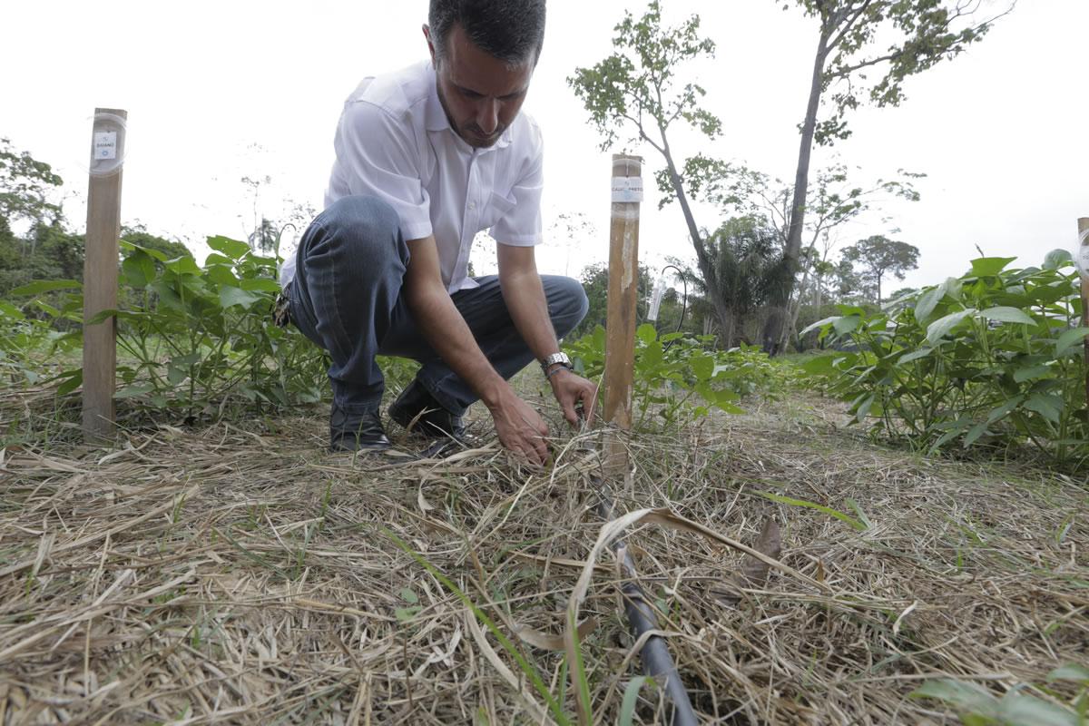 Área da pequisa na horta da Ufac: alternativa para que pequeno produtor possa irrigar sua plantação mesmo em áreas isoladas (Foto: Divulgação/UFAC)