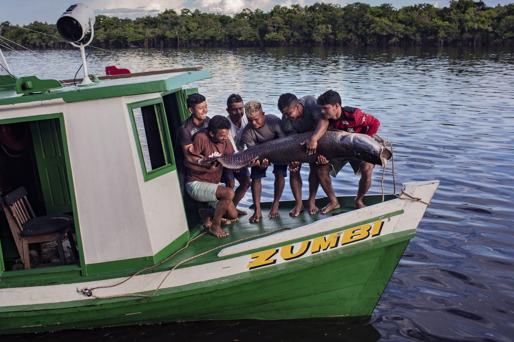 Pesca de pirarucu no sul do Amazonas: projeto Gosto da Amazônia levou chefs de cozinha do Rio de Janeiro até a Terra Indígena Paumari, para conhecer o manejo sustentável do pirarucu e seus impactos econômicos, sociais e ambientais na região (Foto: Marizilda Cruppe)