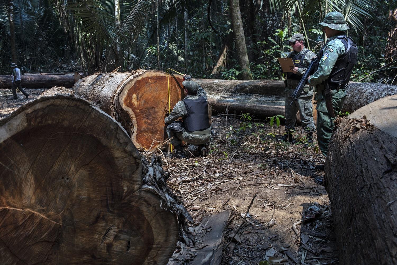 Funai e Polícia Ambiental de Rondônia fazem a maior apreensão de madeira do ano na Terra Indígena Uru-Eu-Wau-Wau. Foto Marizilda Cruppe