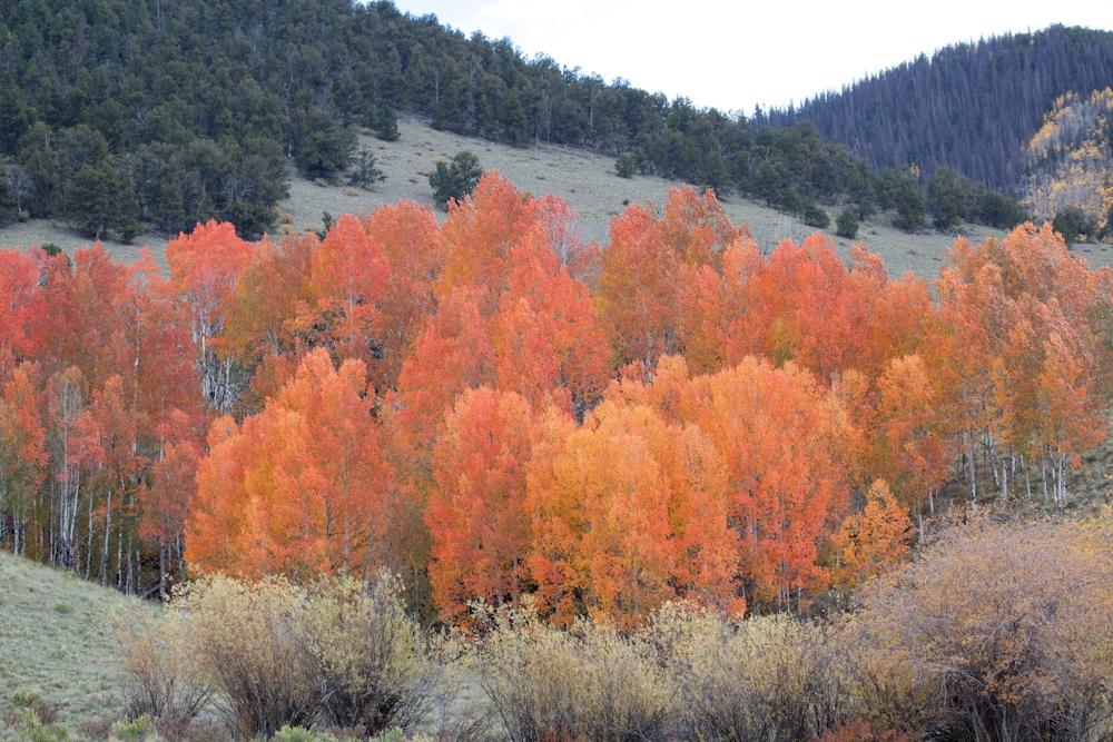 A preservada Floresta Nacional do Rio Grande, no sul do Colorado. As árvores que não são da família de pinheiros perdem as folhas no inverno. Foto Divulgação