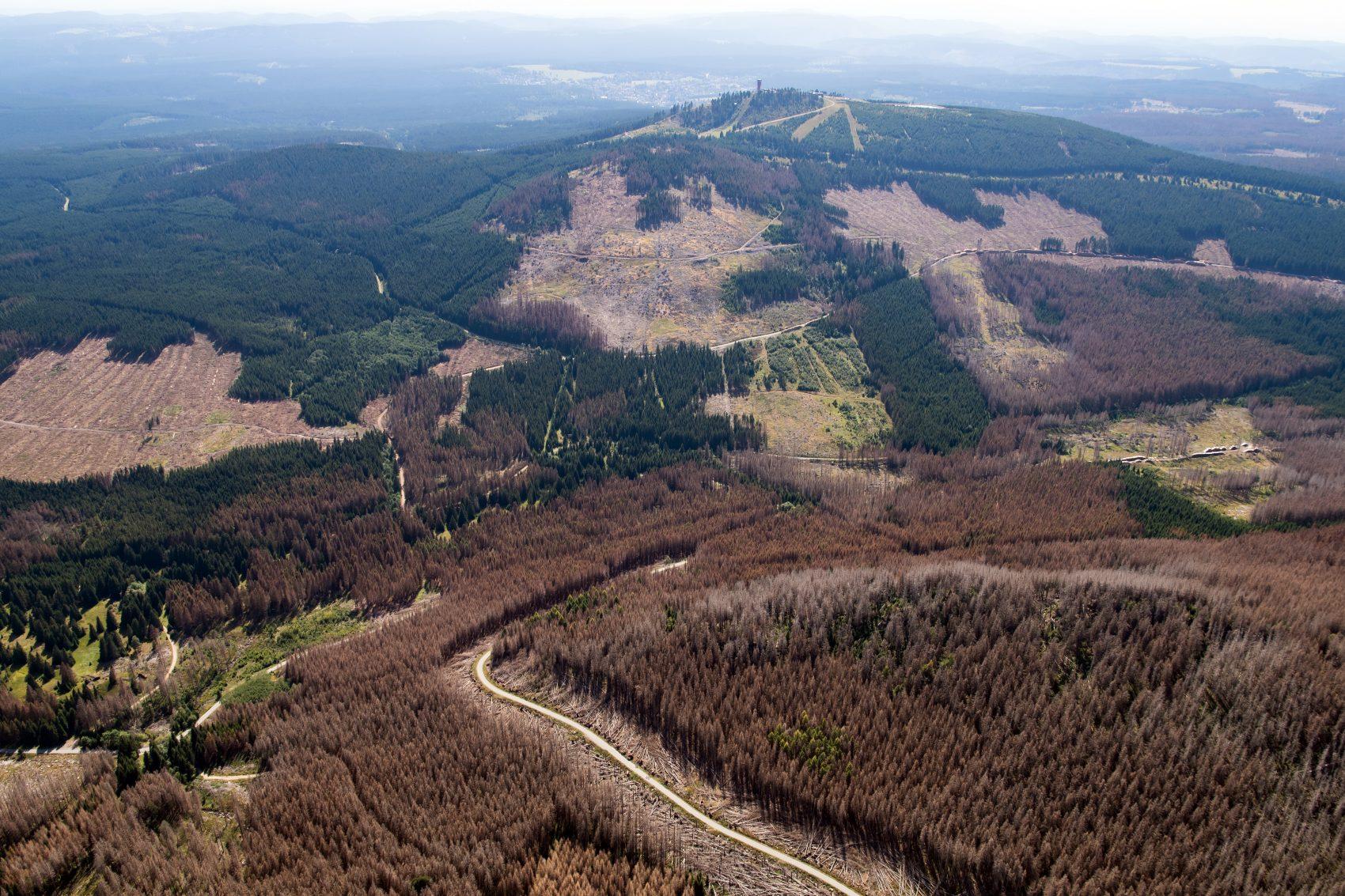 Alemanha com partes sem árvores: secas prolongadas e falta de umidade no ar tornam mais difícil recuperação da natureza (Foto: Swen Pförtner/DPA)