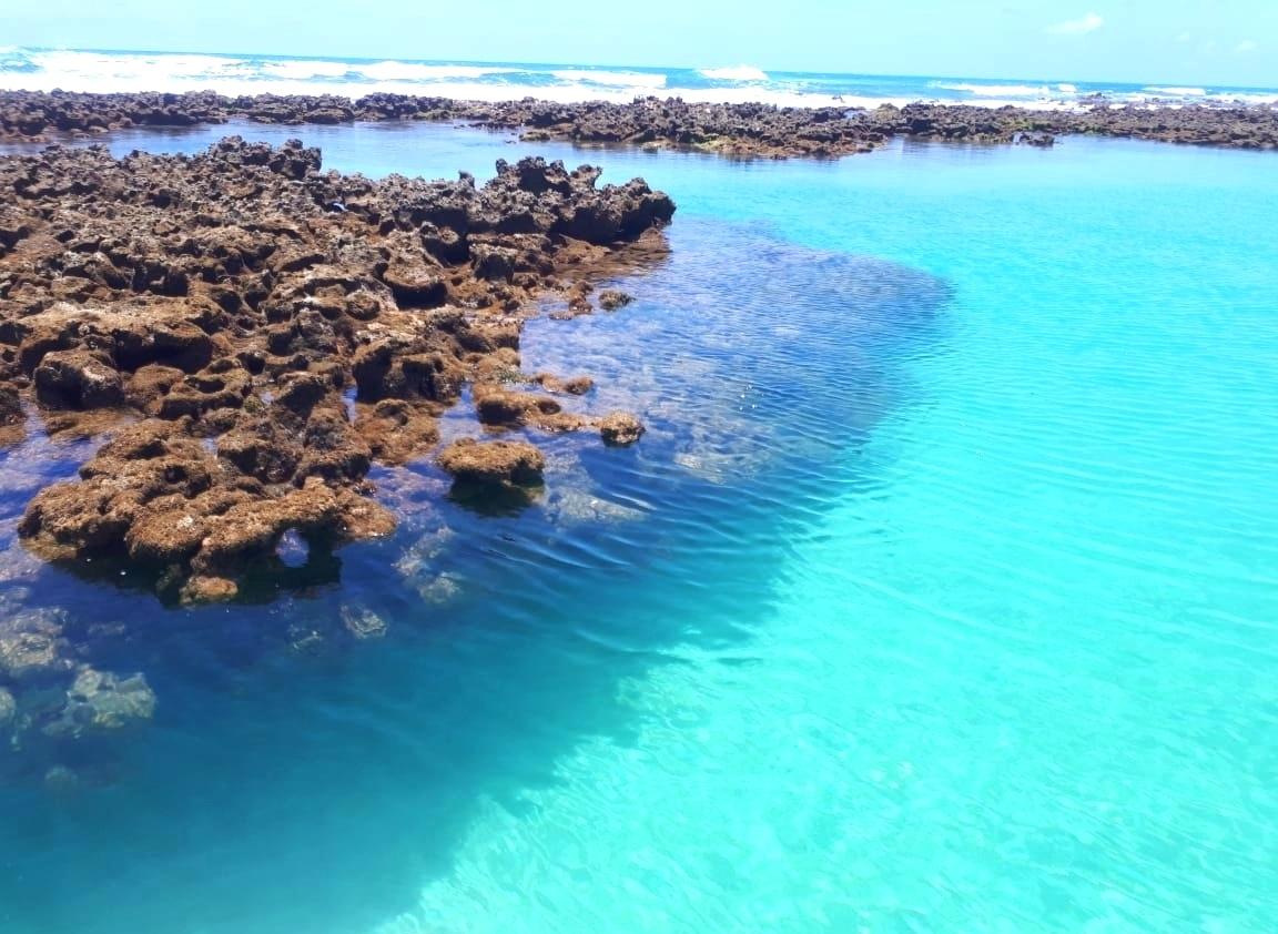 Área de corais em Tamandaré, um paraíso ameaçado. Foto Fernanda Amaral