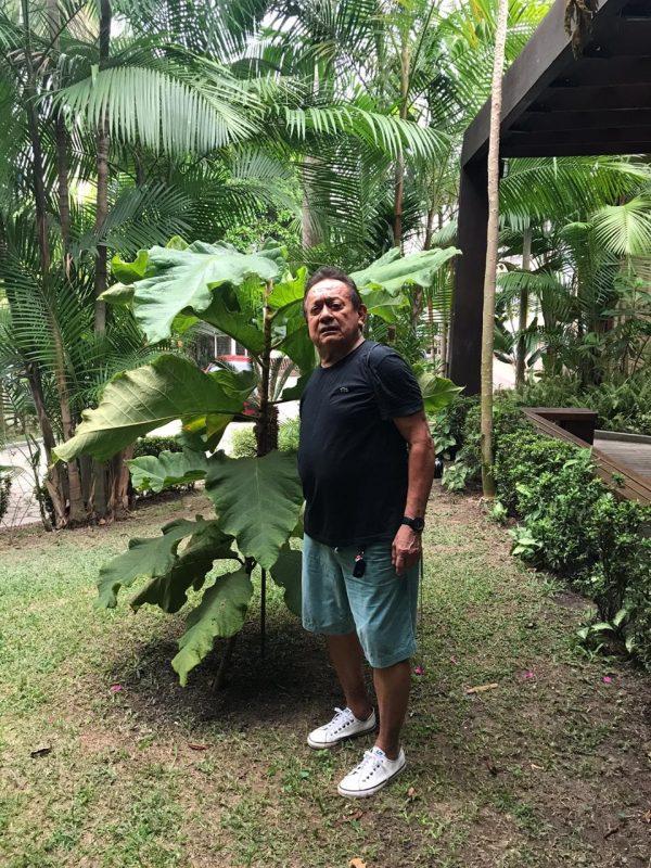 O pesquisador Cid Ferreira, do Inpa, e a Coccoloba gigantifolia que plantou no seu quintal. Foto Divulgação