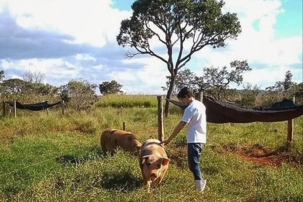 Projeto da UnB trabalha atualmente com suínos, bovinos, frangos de corte e codornas na Fazenda Água Limpa: busca das melhores condições para os animais do Cerrado (Foto: BioCer/Arquivo Pessoal)