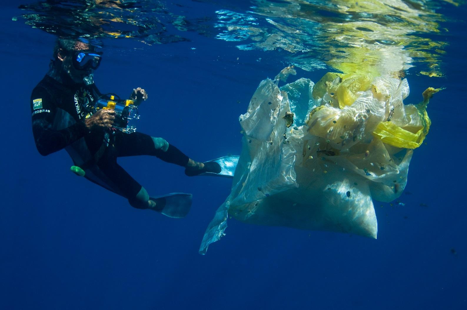 Para alcançar o mar, os filhotes precisam driblar os predadores naturais, os riscos de captura incidental por redes de pesca e o excesso de lixo plástico. Foto Fundação Pró-Tamar