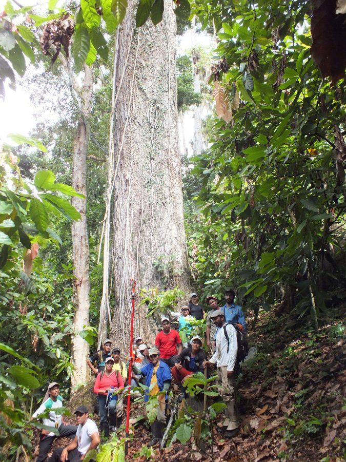 Coletores de sementes da Comunidade Pedra Bonita em Itamaraju no Sul da Bahia: Programa Arboretum faz parte do Pacto para Restauração da Mata Atlântica (Foto: Divulgação)