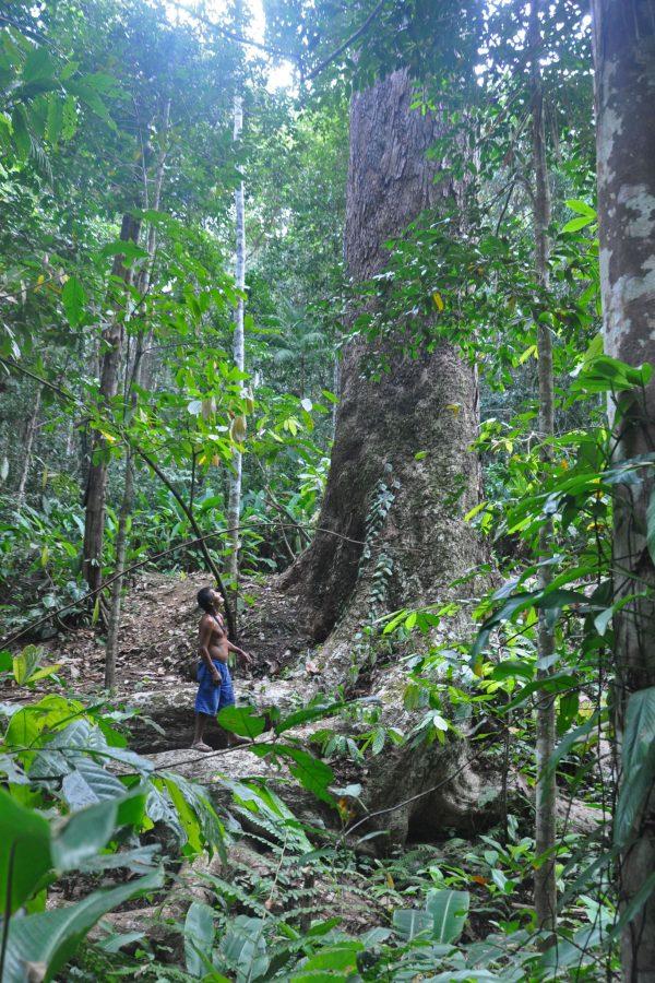 Indígena Pataxó no núcleo de Porto Seguro, do Programa Arboretum: comunidades indígenas participam de atividades como coleta de sementes, plantio de espécies nativas e produção de mudas (Foto: Divulgação)