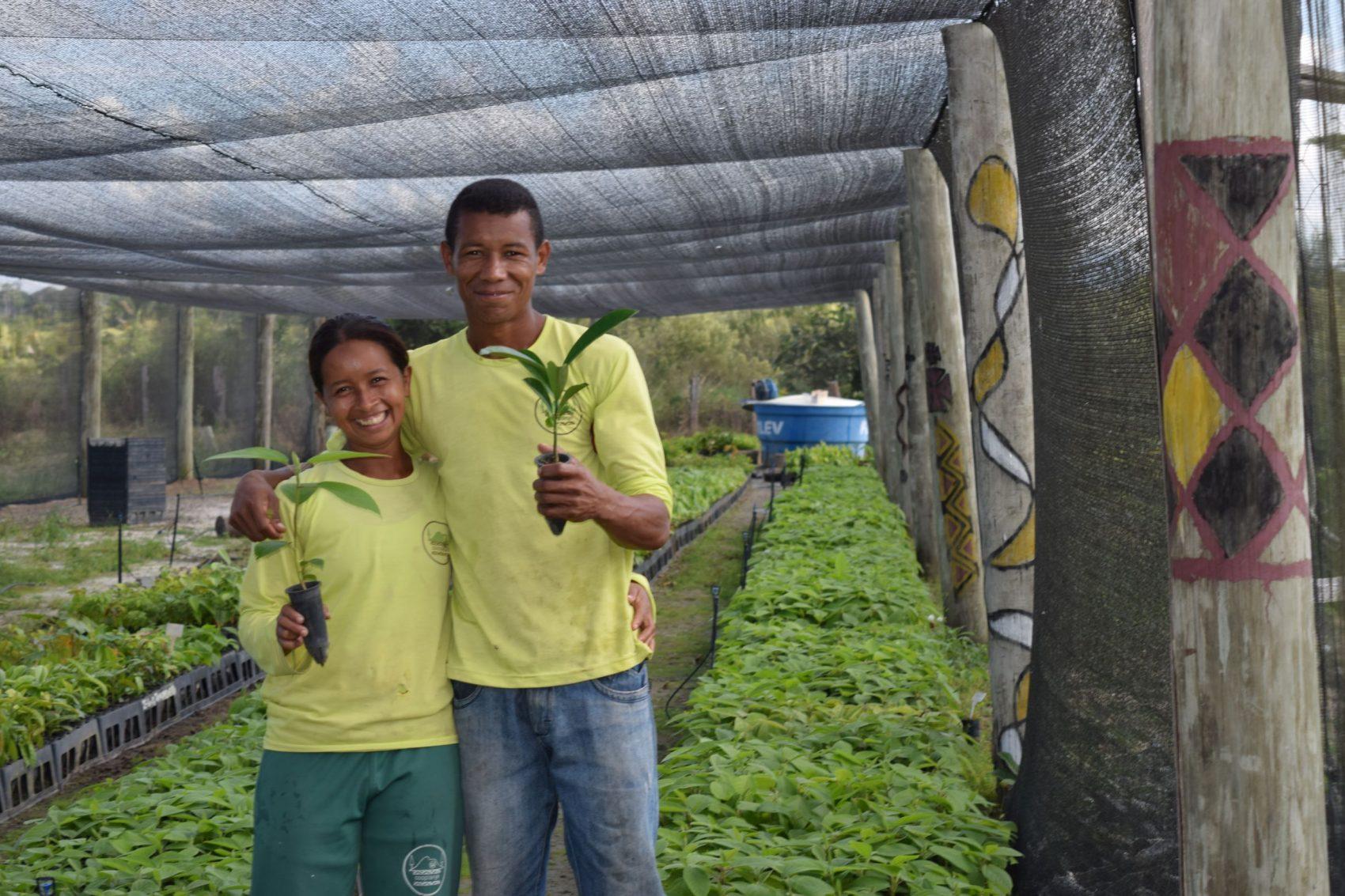 Viveiro de mudas do Programa Arboretum: quase 900 mil mudas comercializadas desde 2015 (Foto: Divulgação)
