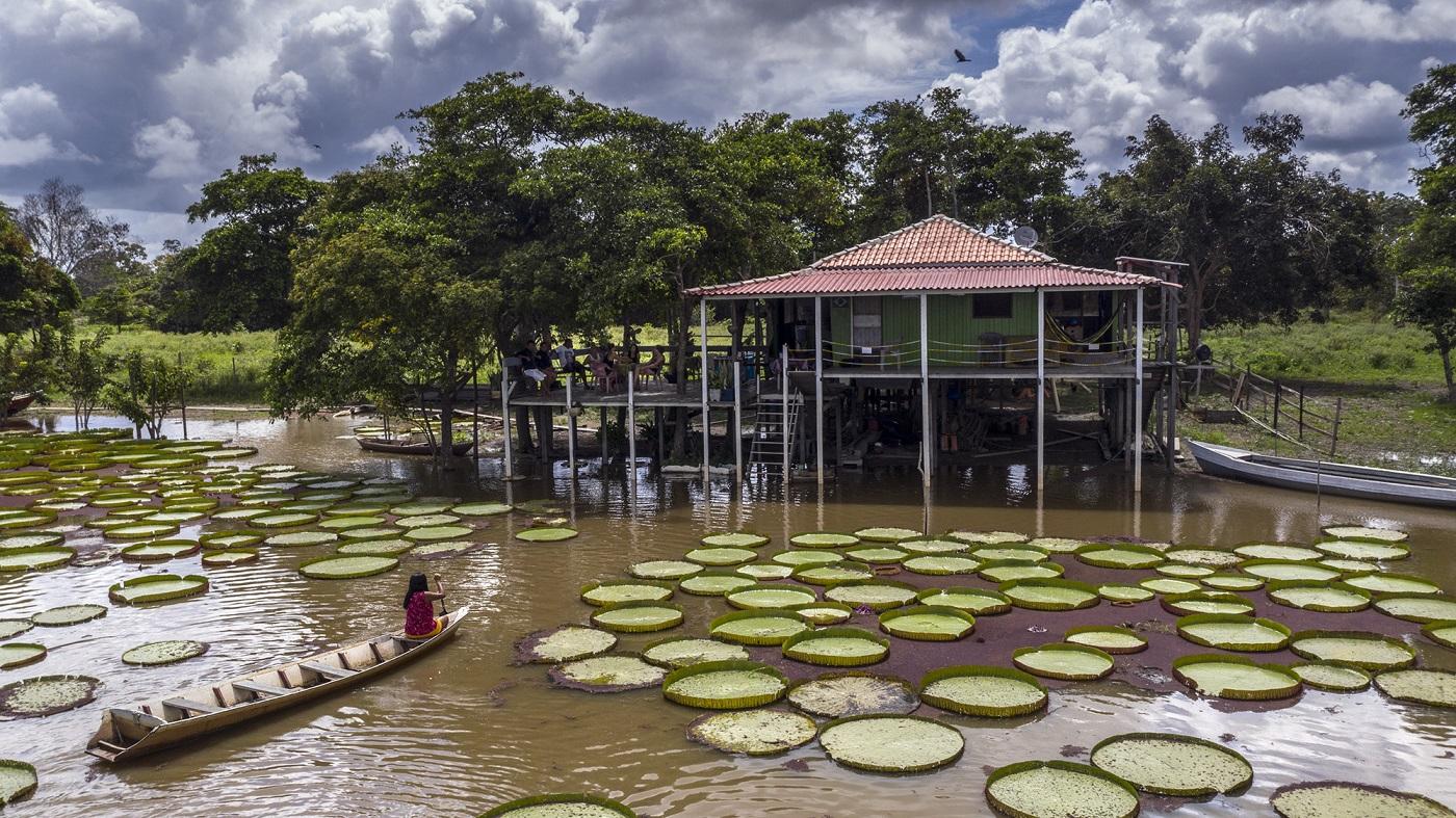 Dulce Oliveira usa uma canoa sem motor para circular pelas vitórias-régia do seu jardim. Apesar dos avisos na entrada para que guias, barqueiros e turistas não utilizem lanchas com motor para se aproximar das plantas, muitos desobedecem e acabam machucando as vitórias-régia Foto Marizilda Cruppe