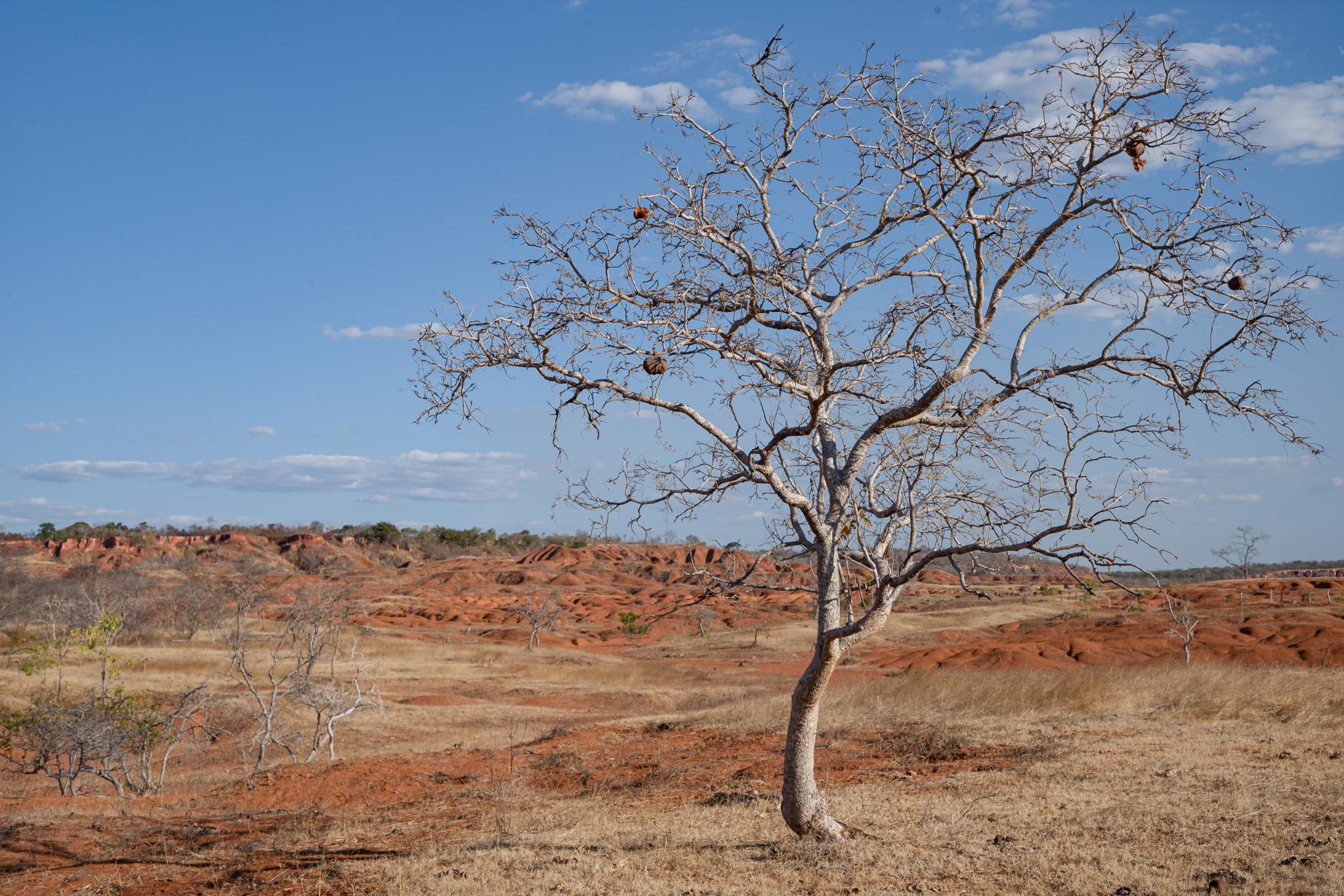 Procuram-se árvores: alguns moradores tentaram fazer um mutirão para plantio a fim de tentar regenerar Gilbués (Foto Márcio Pimenta)