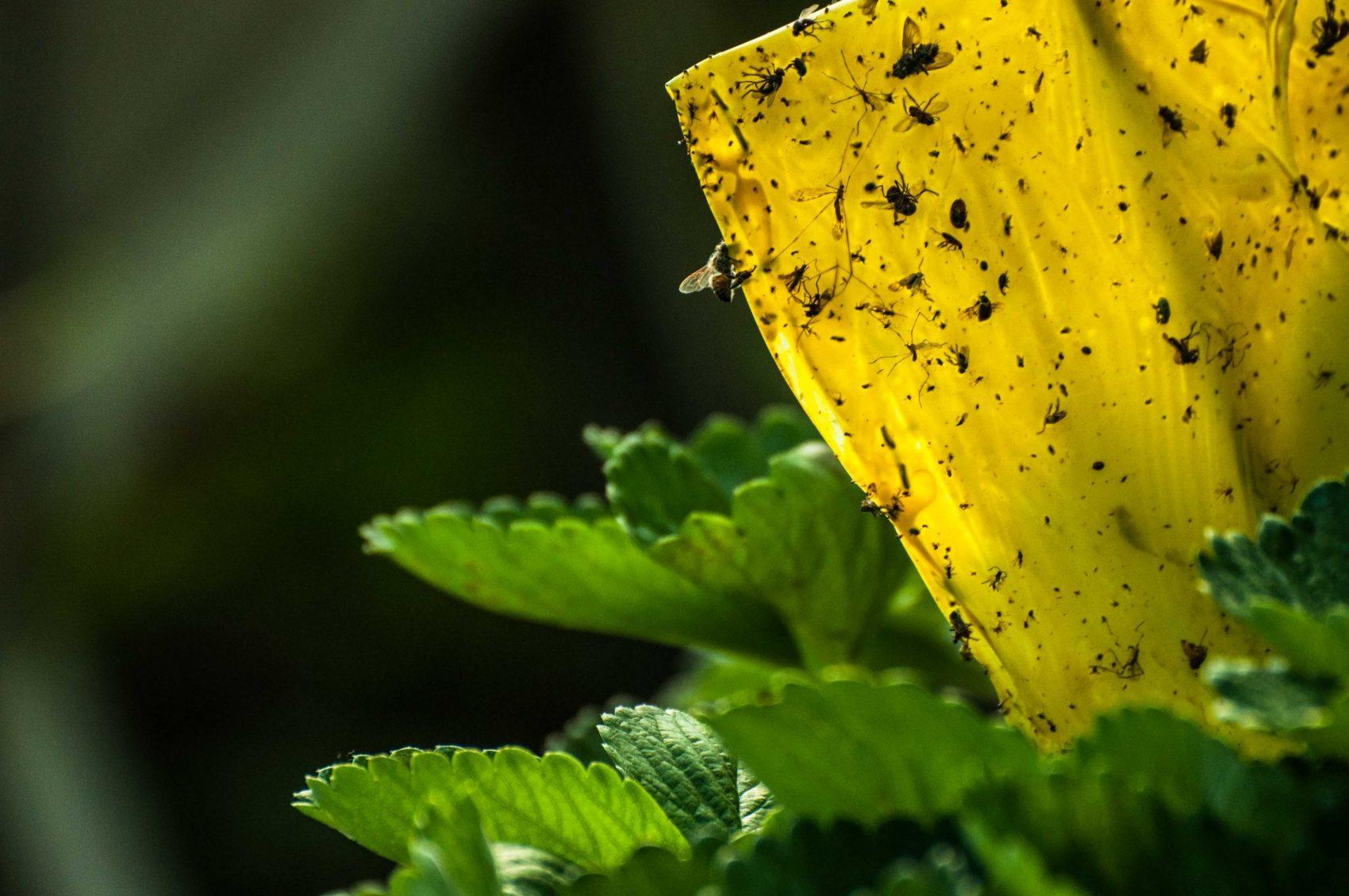 A agricultura de base ecológica, em suas variadas manifestações, pode ser um virtuoso caminho na busca pela harmonia entre produção e conservação