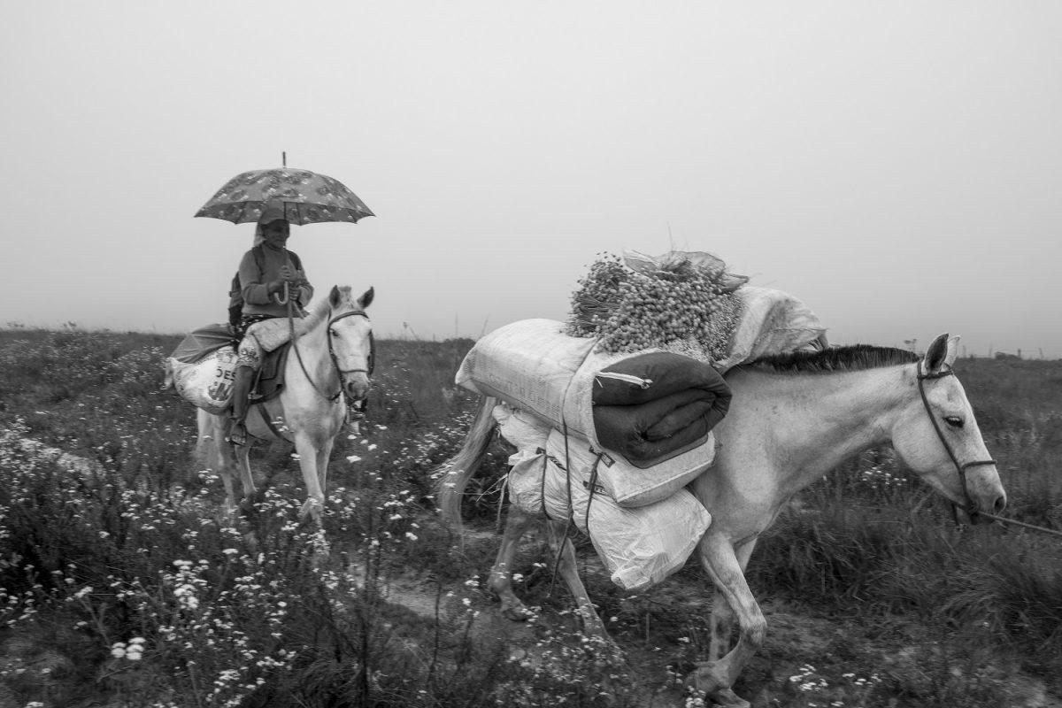 O Sistema Agrícola Tradicional (SAT) das apanhadoras de flores sempre-vivas da Serra do Espinhaço é múltiplo e diverso, mantendo uma relação ambientalmente sustentável com a natureza. Foto João Roberto Ripper