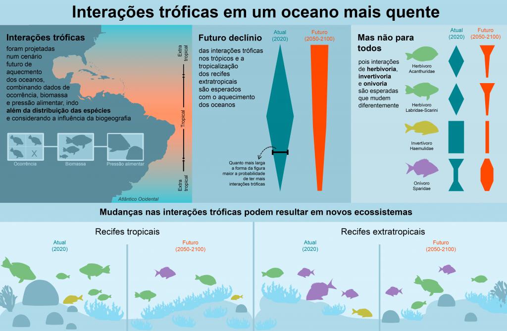 Interações trópicas dos peixes - a forma como se movimentam e a intensidade com a qual buscam comida - devem se modificar com o aquecimento dos oceanos, alertam cientistas (Gráfico: Kelly Inagaki/UFRN)