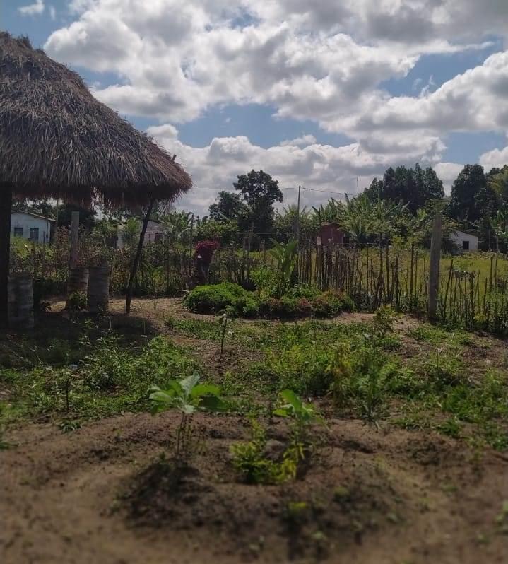 Horta na aldeia: respeito à natureza. Foto de Tamikuã Pataxó