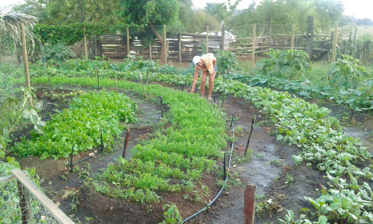 Luzinete e suas hortaliças: redução no na variedade de produtos durante a pandemia (Foto: Arquivo Pessoal)