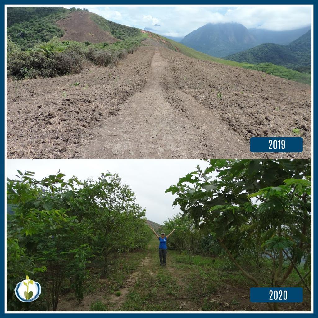 Mata Atlântica: reflorestamento na região de Cachoeiras de Macacu. Reprodução