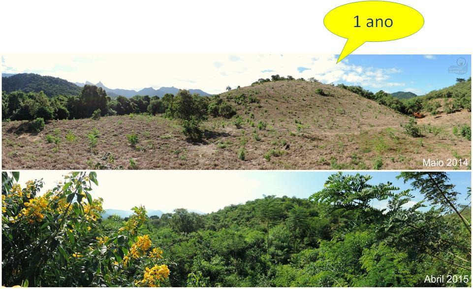 Mata Atlântica: reflorestamento de encosta em Cachoeiras de Macacu. Reprodução