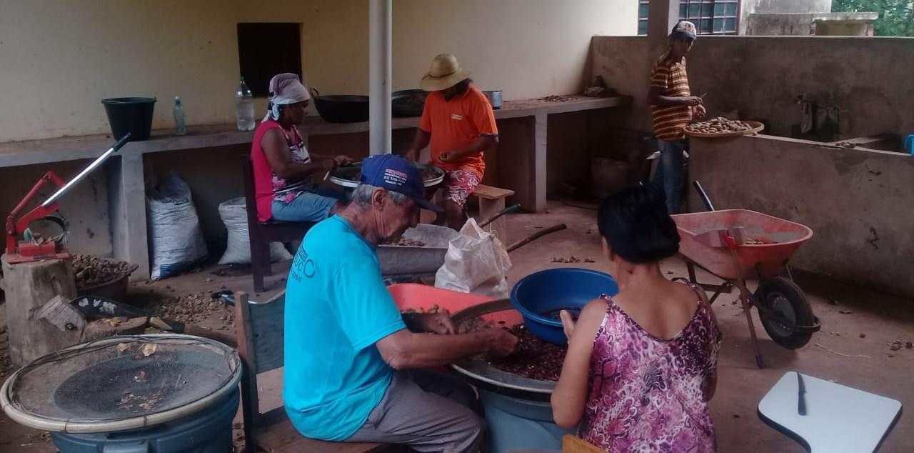 Colheita e seleção de castanha de baru no Ceppec, em Nioaque (MS). Foto divulgação