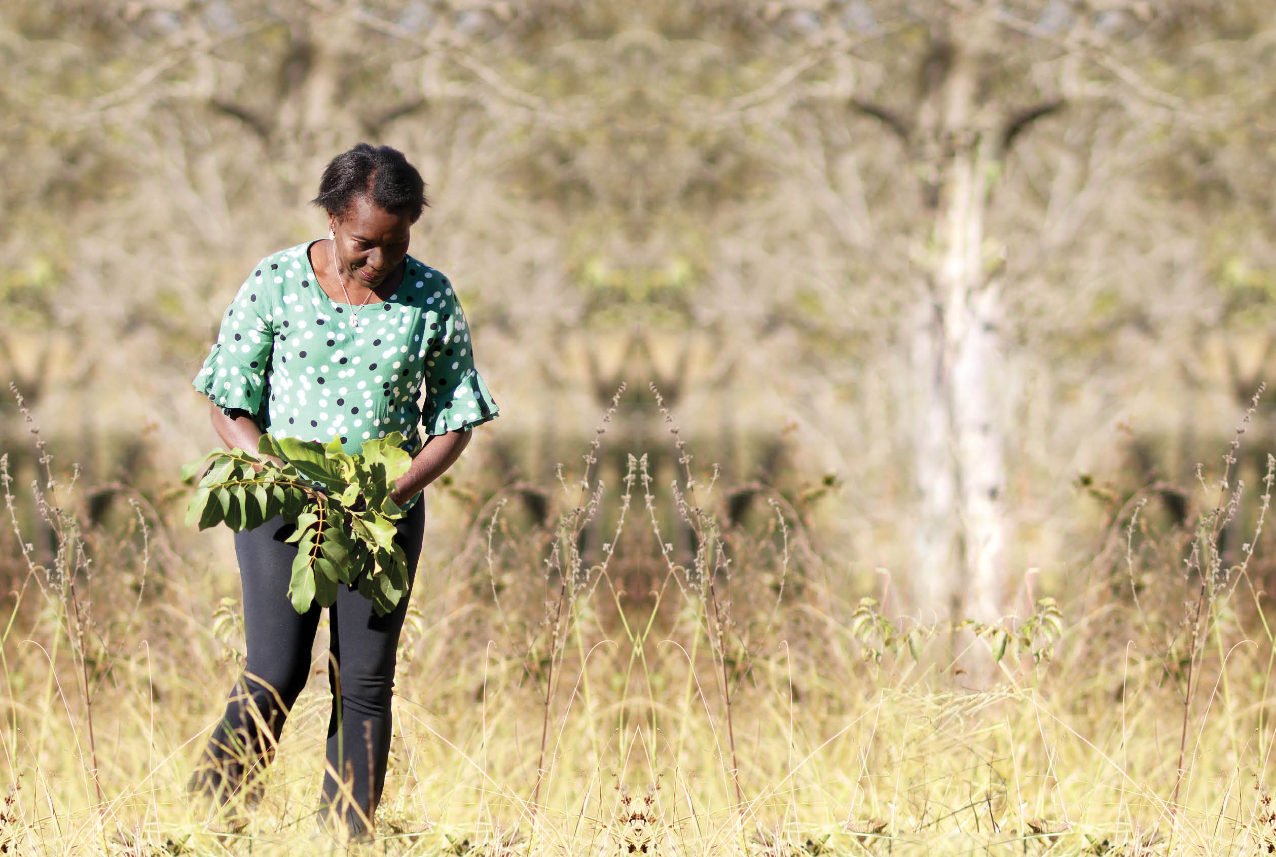 Matriarca colhe plantas no Cerrado: agronegócio destrói vegetação original. Foto divulgação