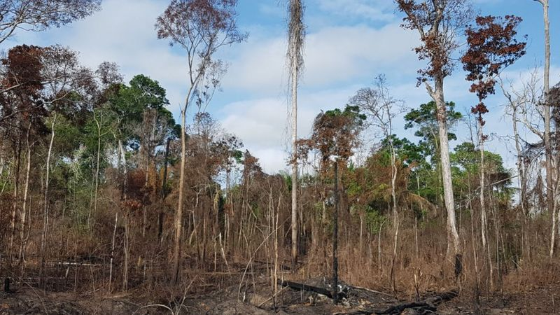Área seca e queimada de Floresta Amazônica no Alto Tapajós: mudanças climáticas exacerbam efeitos do El Niño (Foto: Erika Berenguer)