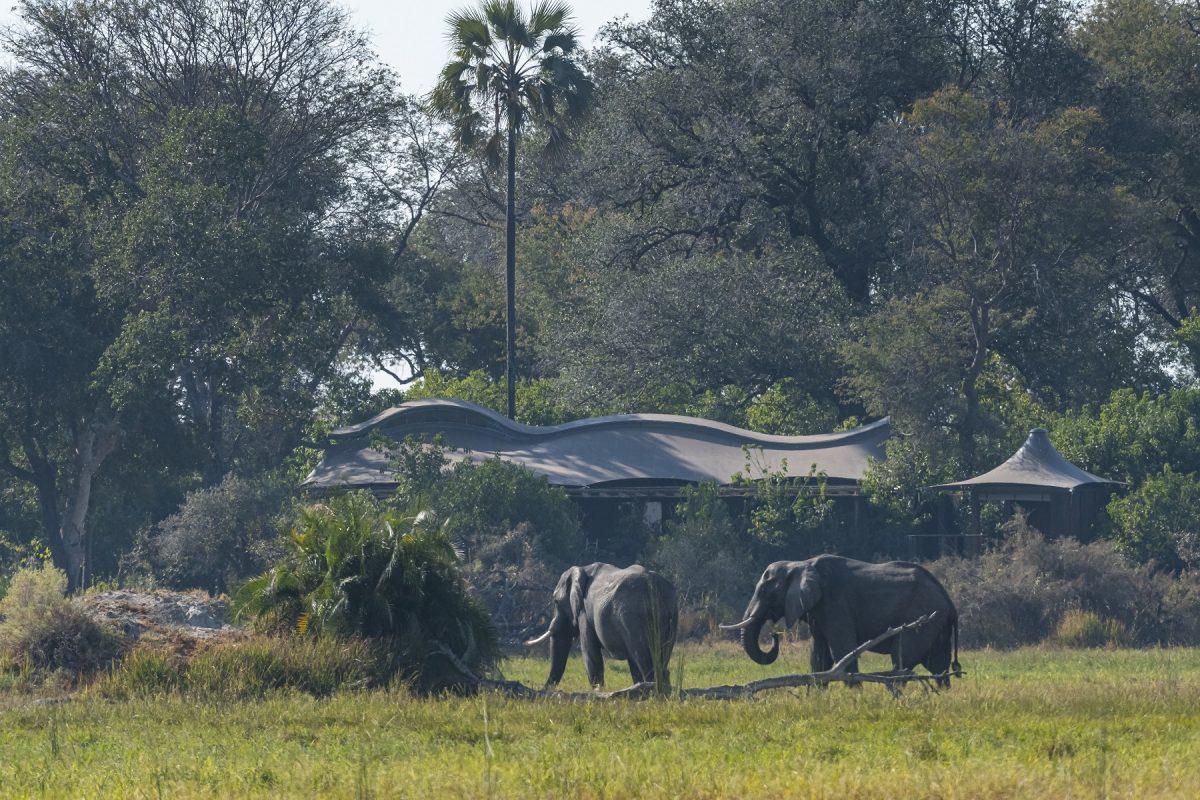 Hotel sustentável: Xigera Safari Lodge