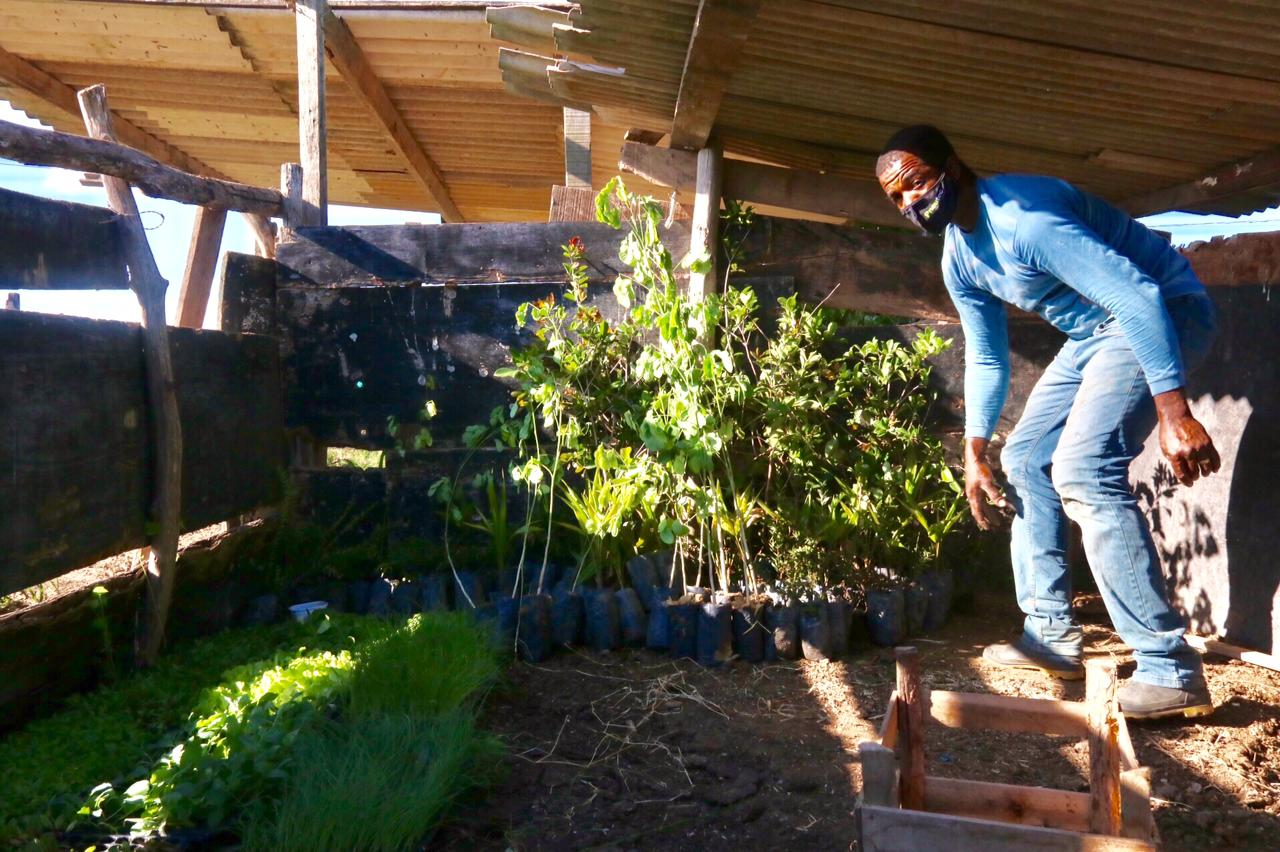 Mudas para a plantação de alimentos orgânicos em acampamento do MST em Campos: agricultura familiar contribui para recuperação de solo intoxicado (Foto: Pablo Vergara/MST)