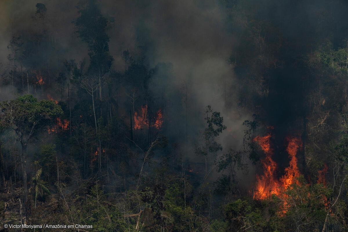Incêndio florestal em área degradada, em processo de desmatamento, em Novo Aripuanã, Amazonas: estado registrou 12 mil focos de calor desde o começo do ano, recorde no país ((Foto: Victor Moriyama/Amazônia em Chamas - 17/09/2021)