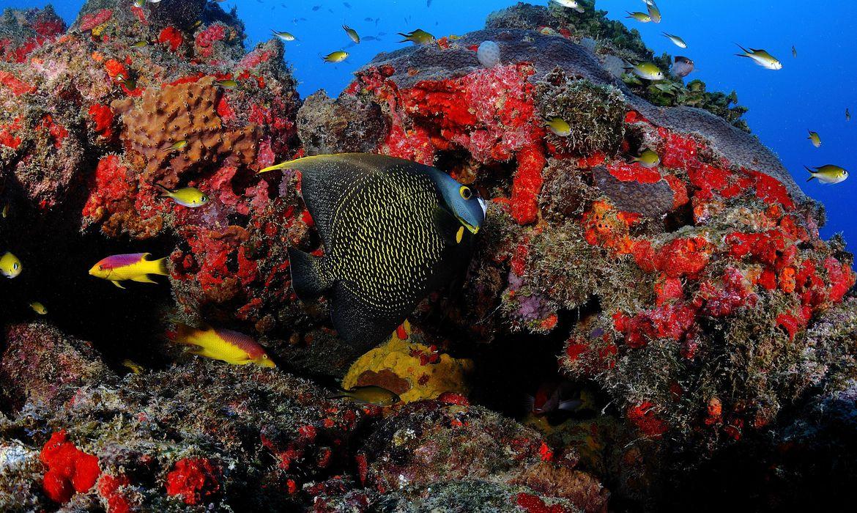 Recifes na Área de Proteção Marinha Costa dos Corais: ecossistema ameaçado pelo aquecimento dos oceanos (Foto: Edson Acioli / ICMBio)