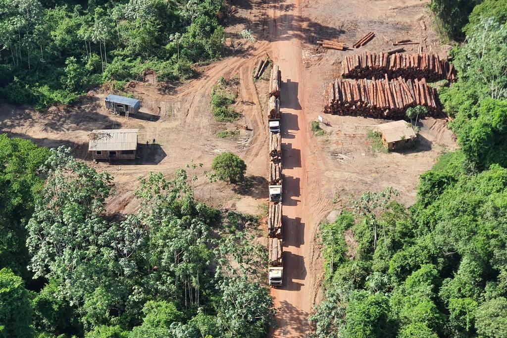 Apreensão de madeira feita pelo Polícia Federal no Pará: ministro do Meio Ambiente apoia madeireiros contra operação policial (Foto: Ascom/Polícia Federal)