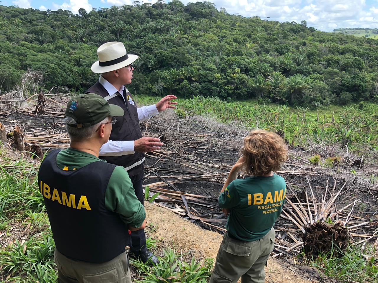 Operação coordenada pelo Ministério Público para combater desmatamento da Mata Atlântica em Alagoas: estado reduz desflorestamento no bioma (Foto: MPAL - 16/09/2019)