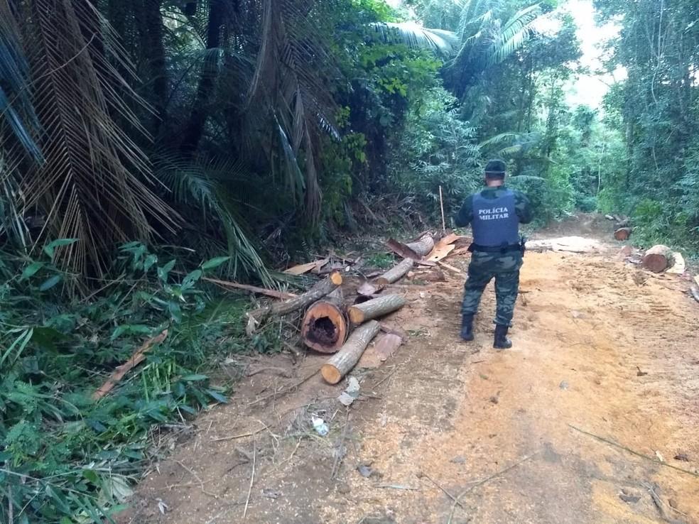 Operação da polícia ambiental do Espírito Santo contra o desmatamento na Mata Atlântica: aumento de mais de 400% da área desflorestada no estado (Foto: SESP/ES - 07/07/2020)